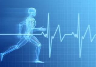 anatomy,biology,bodies,cardiology,conditions,endurance,fitness,Fotolia,health,heart rates,humans,medical,orthopedic,people,physical,pulses,running,sciences,therapies